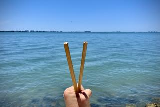reusable straws in front of sarasota bay