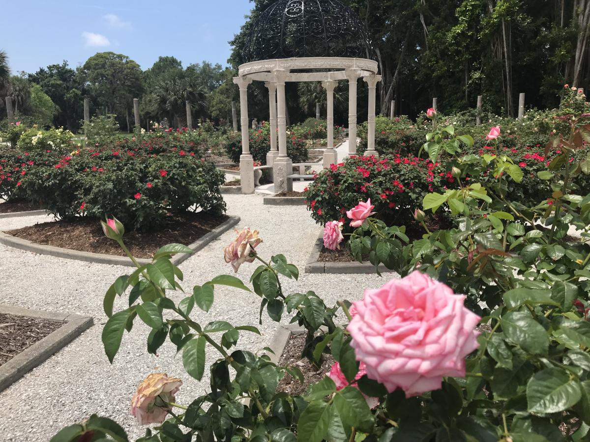 rose garden at the ringling museum