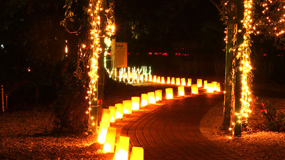 Holiday Lights Spectacular at Jungle Gardens