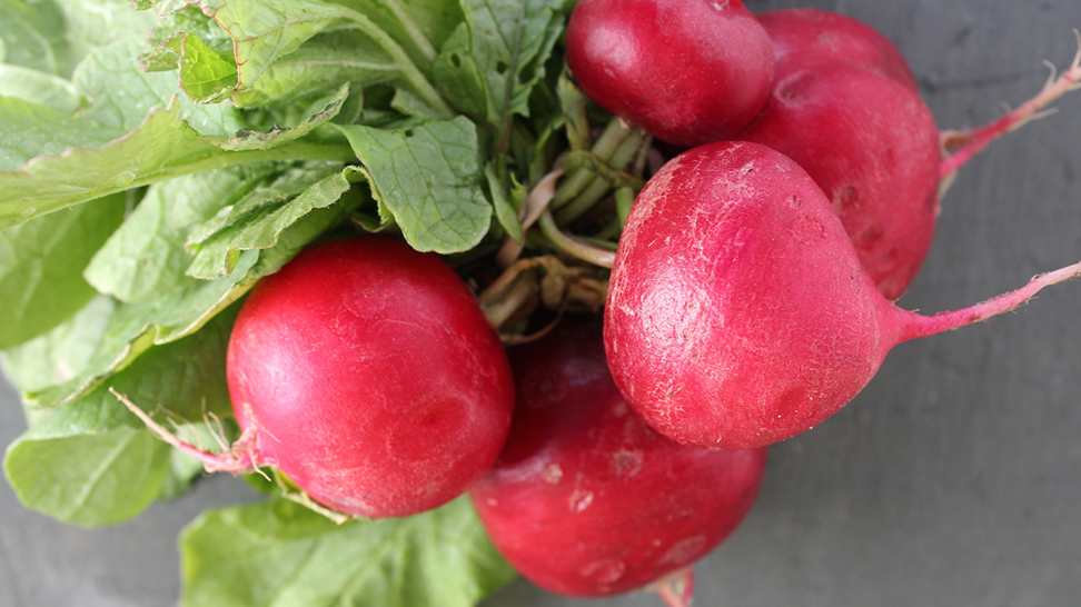 Radishes.  Photo credit: Robin Draper