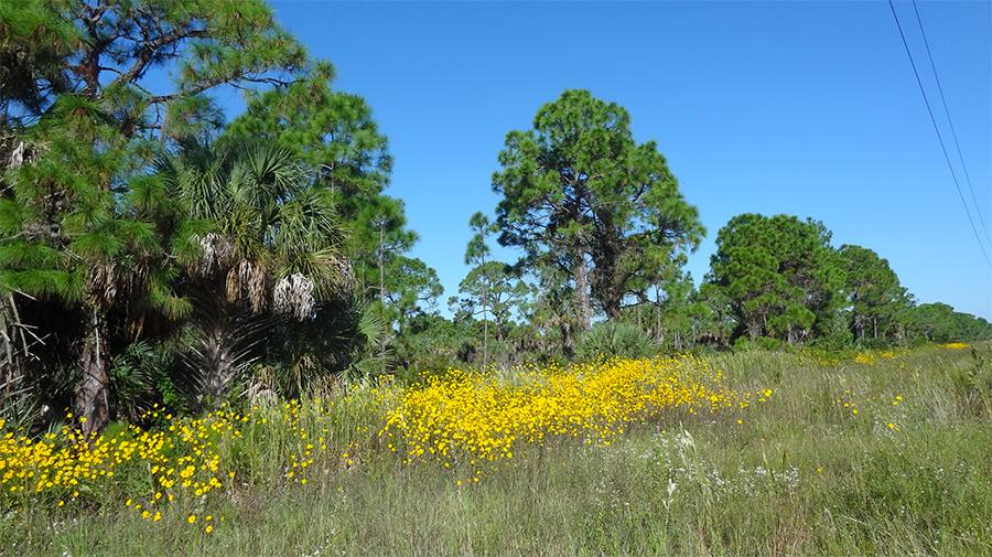Scherer-Thaxton Preserve. Photo courtesy of Sarasota County Government