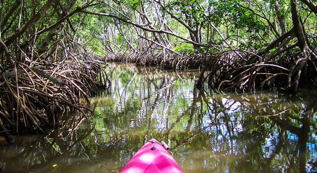 Things To Do Around Lido Key Visit Sarasota - 10 things to see and do in sarasota