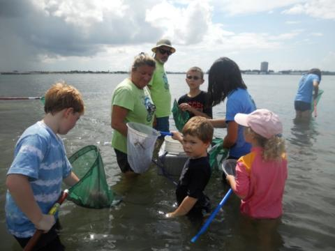 7407_640x480.jpg - Catching critters in the grass flats of Sarasota Bay to identify and release!