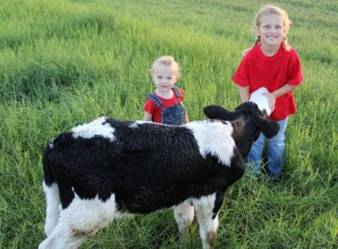 942_651x480.jpg - Feeding Baby Calf