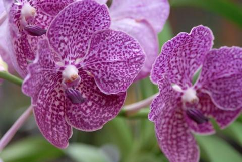 446_716x480.jpg - Stunning Display of Rare & Exotic Orchids