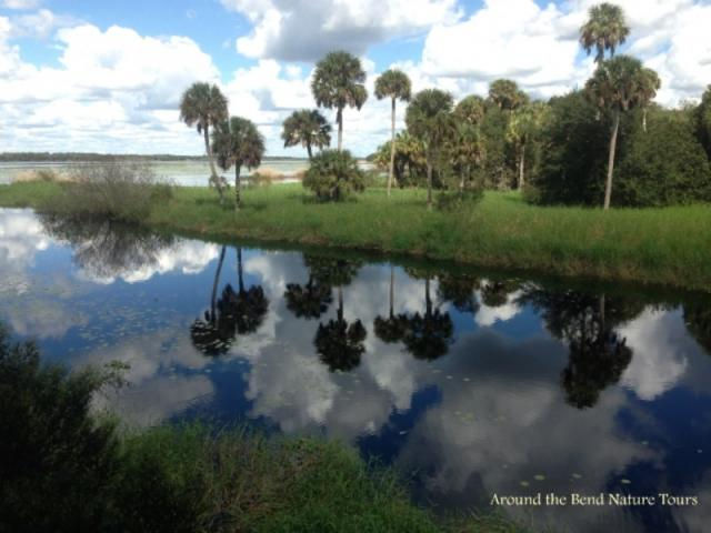 7410_640x480.jpg - Discover the majesty of the cabbage palms at Myakka State Park - along with alligators and other things!