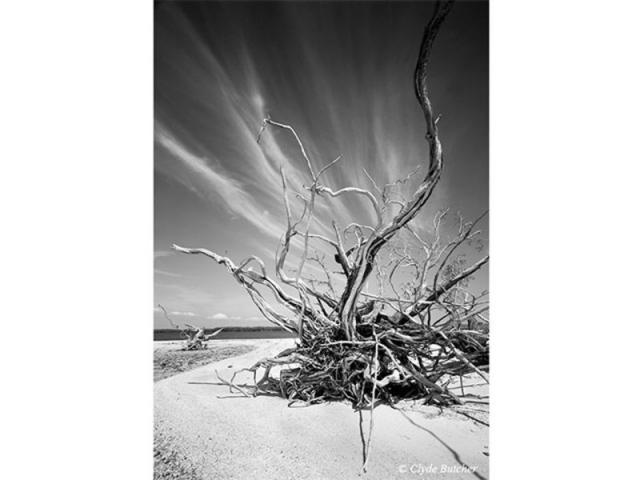 """Indian Key 5 - """"Hurricane Andrew deposited a lot of dead trees onto the beaches of the Ten Thousand Islands in the Everglades National Park. By the time I went to photograph them, the trees had been bleached white by the sun, creating beautiful white pieces of sculpture, just waiting to be photographed!""""-Clyde Butcher"""