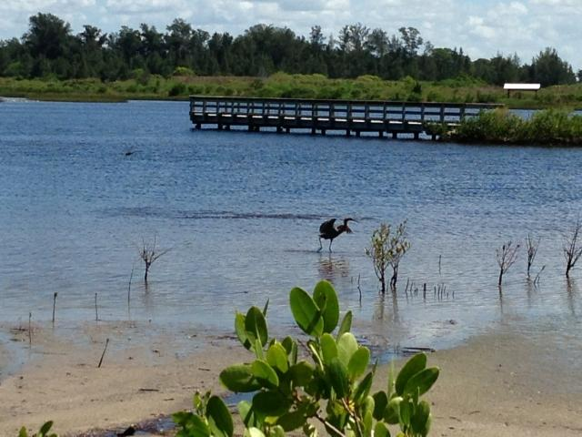 Coastal Climate Walk: Mangrove Migration