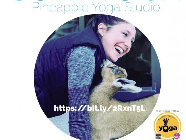 Goat Yoga at Pineapple Yoga Studio