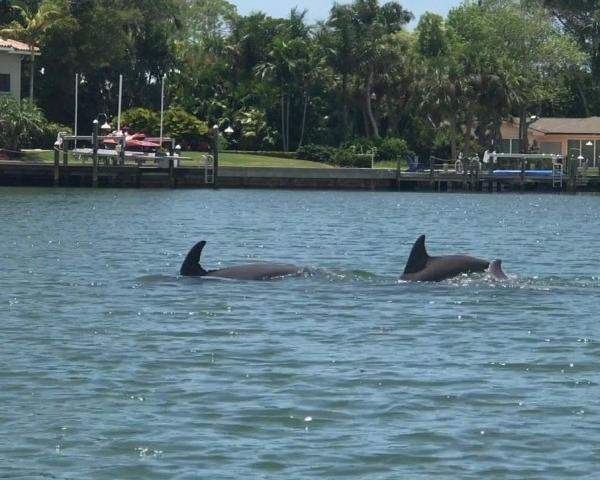 Dolphins - A pod of dolphins traveled by us while on tour today!!!