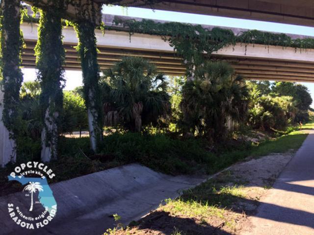 Under the overpass urban jungle