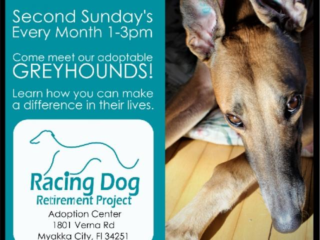 RDRP Greyhound Open House