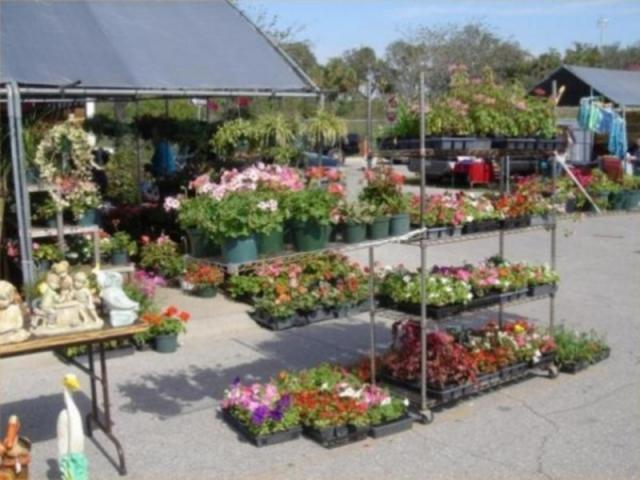333_640x480.jpg - Plants, plants and more plants for your home, patio and porch....fresh from the growers!