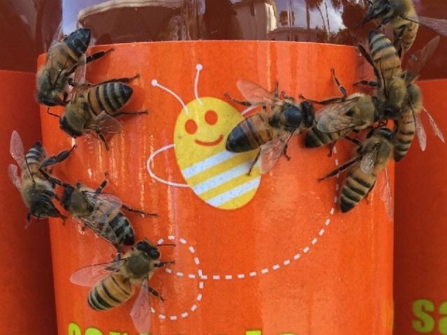 Sarasota Honey Bee Tour