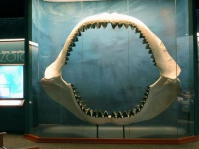 423_640x480.jpg - Megladon Jaw at the South Florida Museum