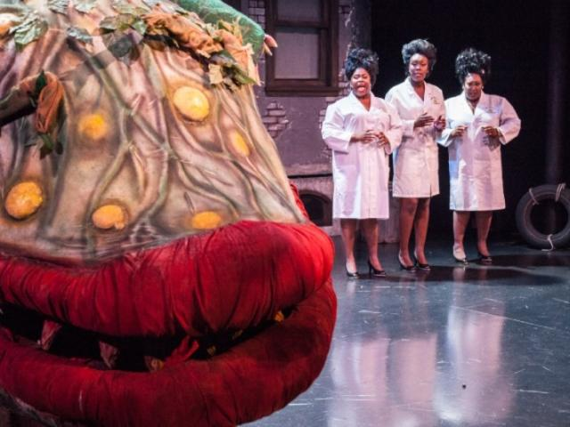 7268_720x480.jpg - Little Shop of Horrors