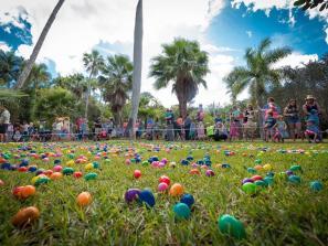 Easter egg hunt at jungle gardens in Sarasota