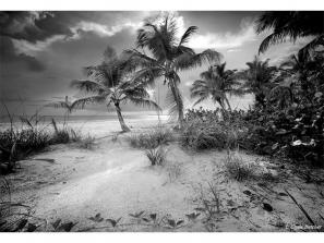 """Estero Island - """"The beaches of Florida are among some of the most beautiful in the world. Our heart-felt and economic appreciation of our beaches should necessitate our involvement in protecting their environment. PLEASE don't let anyone put oil wells offshore of Florida. I am from Southern California where one has to take paint remover to the beach in order to remove the oil waste from soles of our feet. Let's make sure that doesn't happen to our beautiful Florida beaches."""" -Clyde Butcher"""