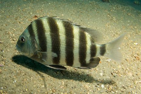 Trash treasures: delicious fish in Sarasota