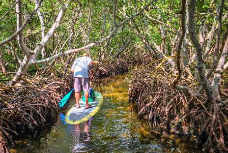 Mangrove tunnels at Ted Sperling Park at South Lido Beach Nature Park. Photo credit: Liz Sandburg