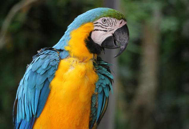 Sarasota Jungle Gardens - Photo Credit: Eddie Kirsch