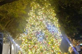 Downtown Sarasota Tree Lighting Celebration
