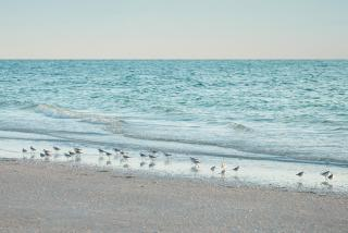 Tranquility on the beach in Sarasota County is a free amenity for any visitor.