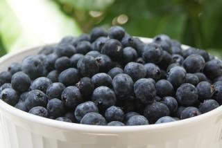 Florida Fresh Blueberry U-Pick