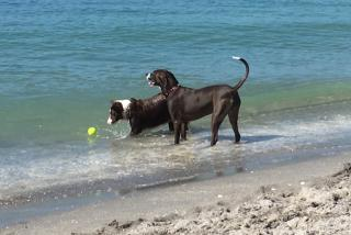 Happy dogs at the dog parks in Sarasota County
