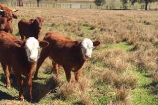 Farm tours in Sarasota County