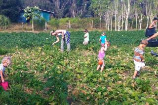 Gleaning - Jessica's Farm