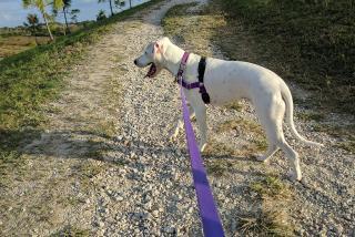 Pet-friendly spots in Sarasota County
