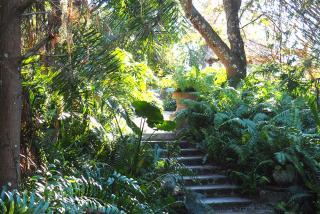 Jungle Walk at Historic Spanish Point.  Photo Courtesy Lauren Jackson