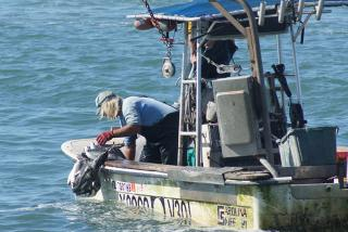 Mullet fisherman hauling in mullet. Photo by Robin Draper.