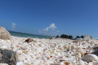 Sarasota beaches Nude Photos 32