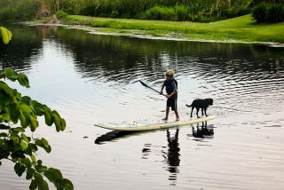 Paddleboarding on Phillippi Creek Liz Sandburg