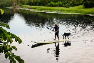 Paddleboarding on Phillippi Creek Liz Sandburg