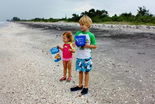 Caspersen Beach, hunting for Sharks' teeth.  Photo credit: Liz Sandburg.
