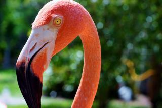 Sarasota Jungle Gardens.  Photo credit: Liz Sandburg