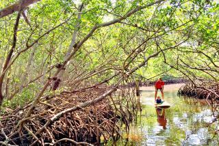 Mangrove tunnels at Ted Sperling Park at South Lido Beach Nature Park.  Photo credit: Liz Sandburg