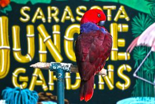Sarasota Jungle Gardens - Parrot with bright red plummage - Photo Credit: Eddie Kirsch
