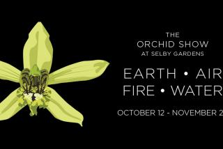 The Orchid Show: Earth, Air, Fire, Water