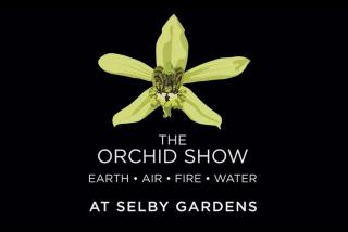 """Orchid Mania"""" The Orchid Craze in Victorian Britain - Sig Event"""