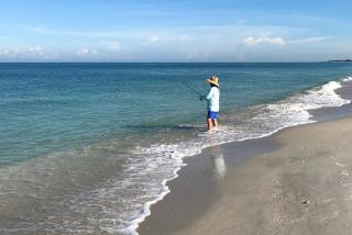 take a walk on the beach and catch a fish visit sarasota