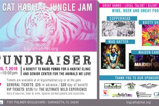 Big Cat Habitat Jungle Jam - Signature event